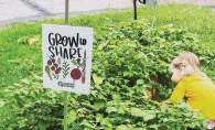A community garden organized by Sustain Hudson