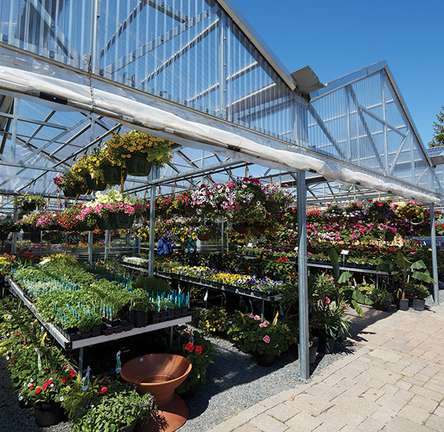 Rows of summer plant options at Abrahamson Nursery.