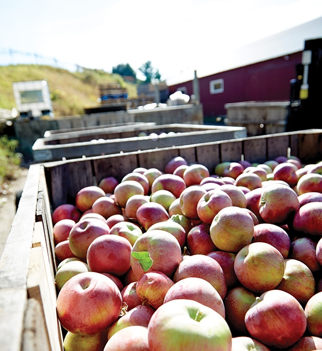 Apples sit in a wooden container at Afton Apple Orchard's Apple Fest