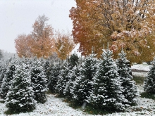Krueger's Christmas Tree Farm