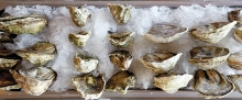 Oysters on ice at Manger in Bayport.