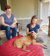 Sarah Bertsch performs acupressure on a dog with cancer.