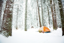 Tent pitched in snowy woods